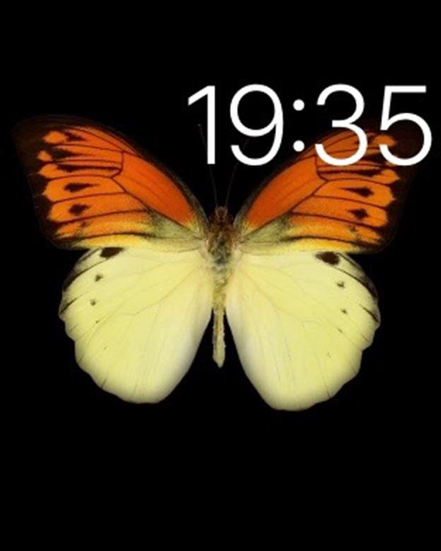 Apple Watchの文字盤に出現する...